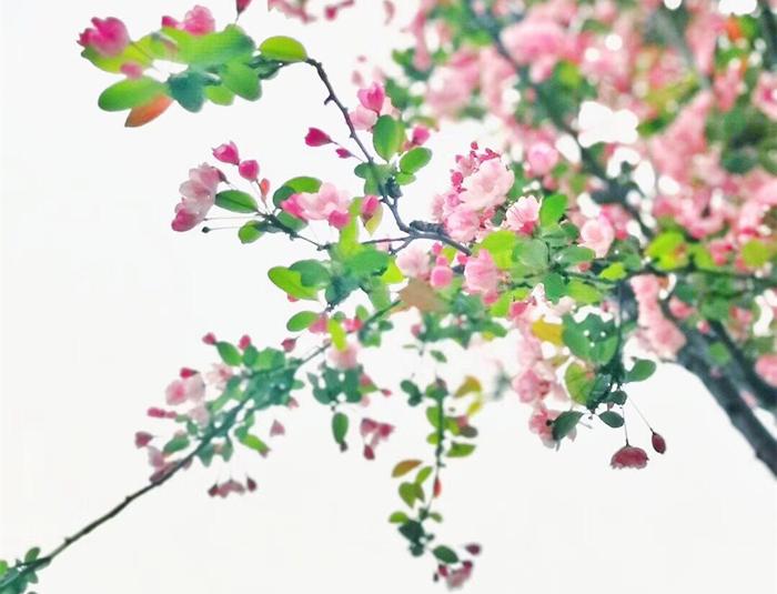 QQ图片20180328092613_副本